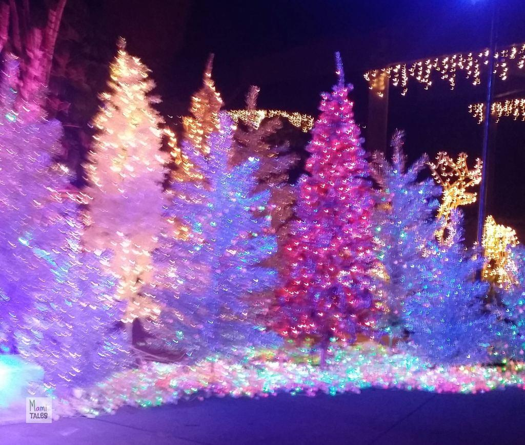 LA-Zoo-Lights-20