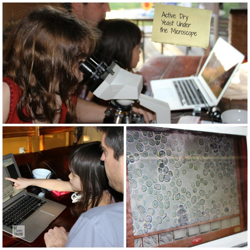 Science-of-Yeast-Microscope